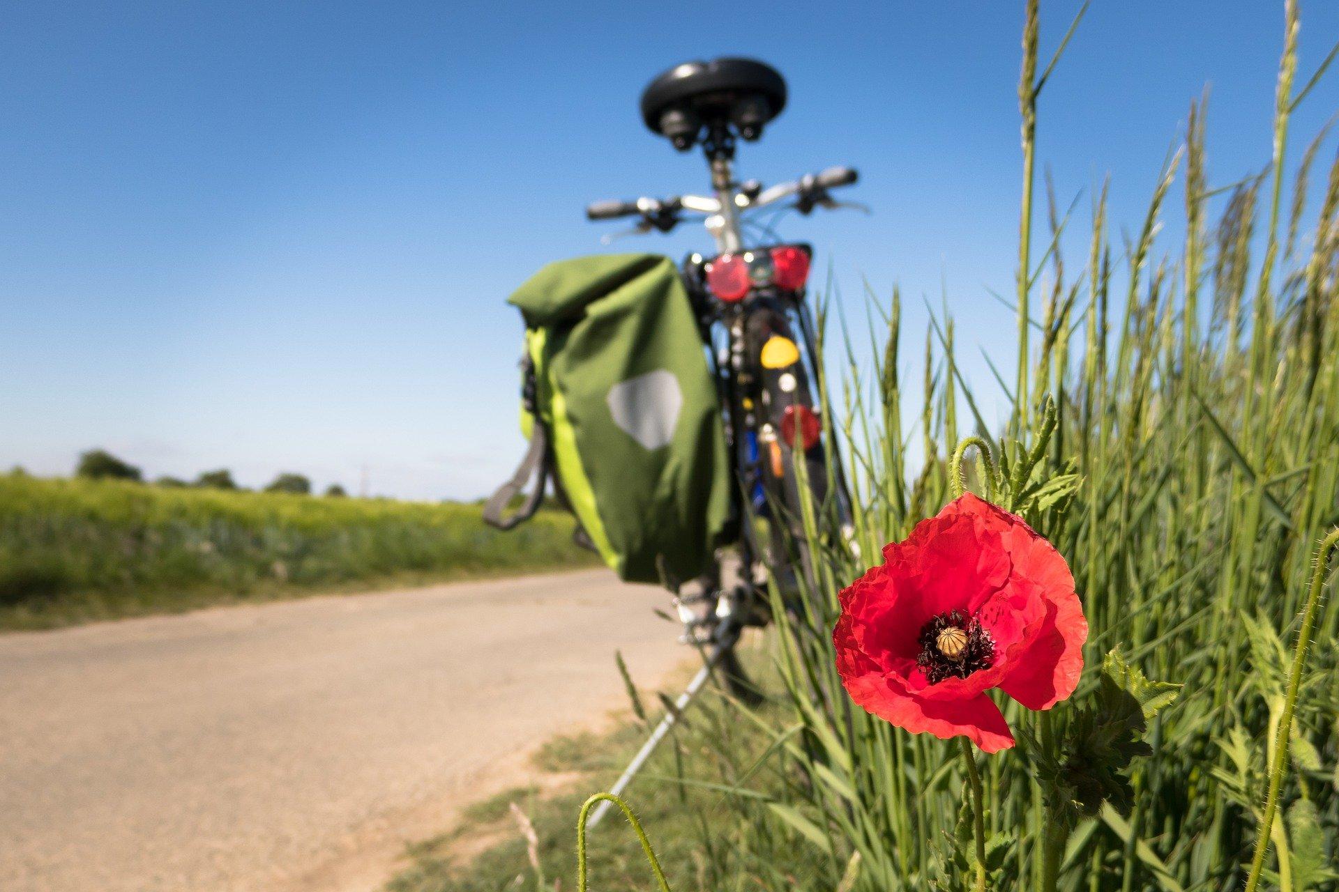 La Ceja y Palmira, dos municipios bicicleteros que buscan contribuir a la movilidad sostenible en Colombia